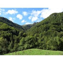 Goji Bio Frais ou sec origine France Hautes pyrénnées montagne entre 1000 et 1400 m d'alitude