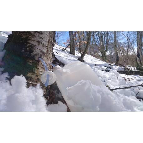 3 Litres Sève de bouleau fraiche, pure , bio, montagne, vallée de barousse Hautes Pyrennées entre 900 et 1500m d'altitude